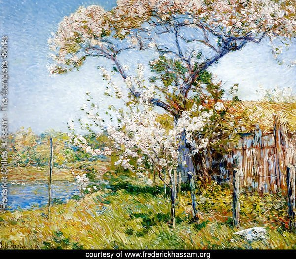 Apple Trees in Bloom, Old Lyme